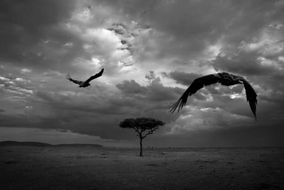Vulture s flight