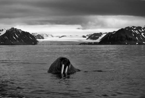 Untitled 5 arctic 2011