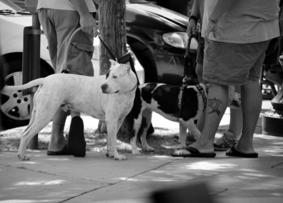 Street scene  6 asheville