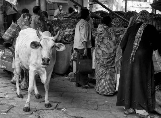 Market in jodhpur