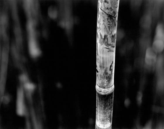 Bamboo song 4