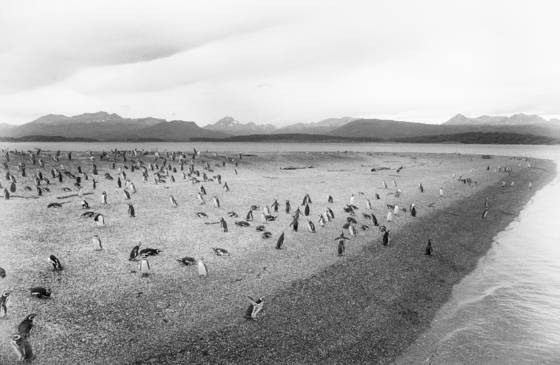 Pinguin island 2