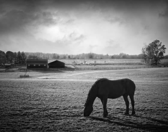 Evening grazer