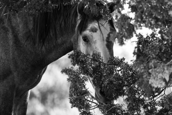 Hiding horse  new mexico usa