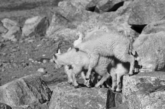 Kids piggyback