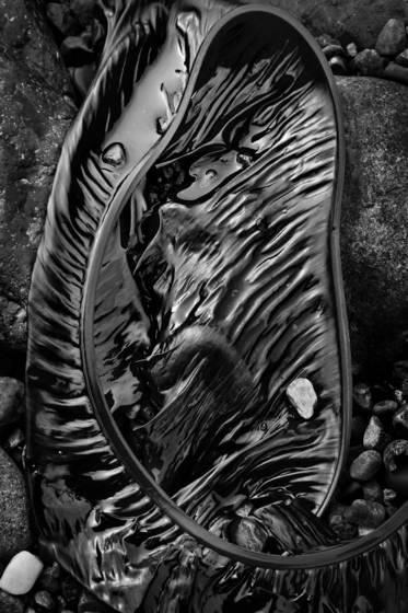 Seaweed 150