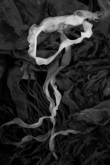Seaweed 43