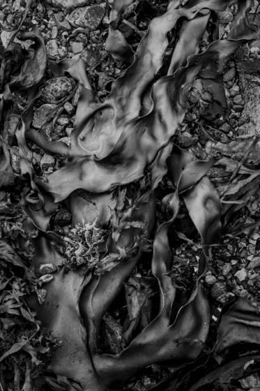 Seaweed 570