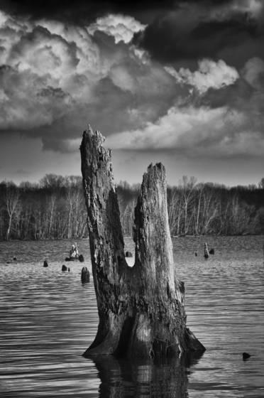 Wetlands  08