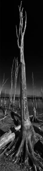 Wetlands 12