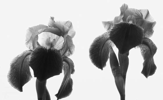 Double iris