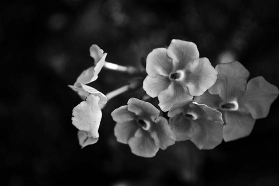 Morikamiflowers1