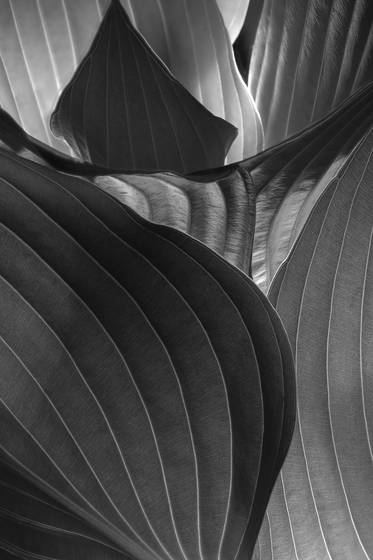Leaves 9