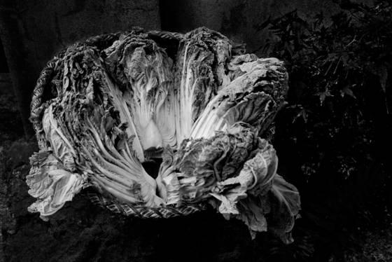 Japanese cabbage