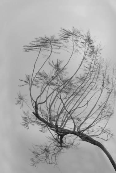 Trees  no  1