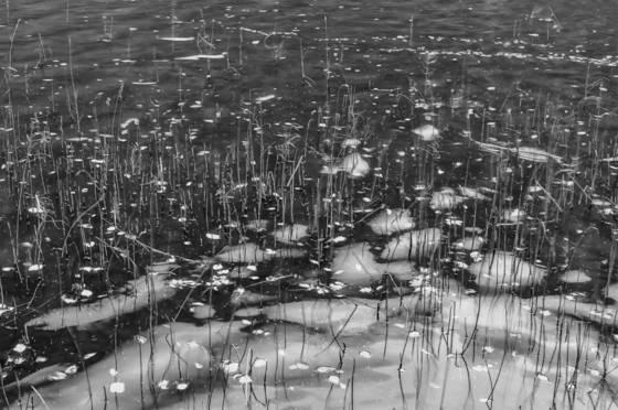 Pond wake