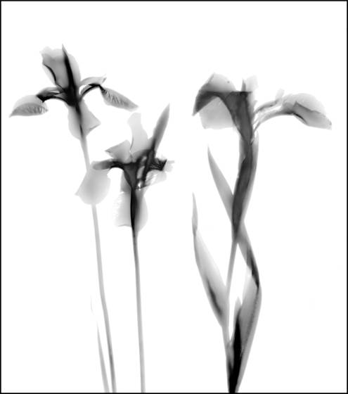 Plant photogram1