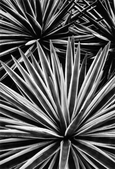 09 spike plant