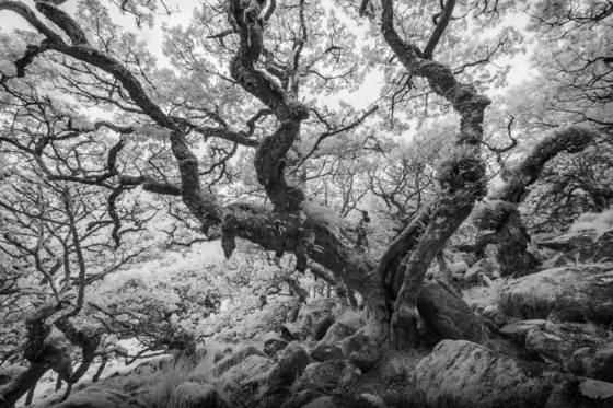Ancient woodlands mcccxxxiv