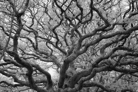 Ancient woodlands mcii