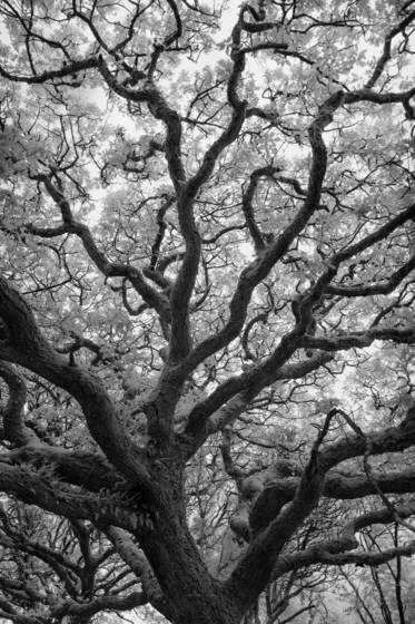 Ancient woodlands mclxi
