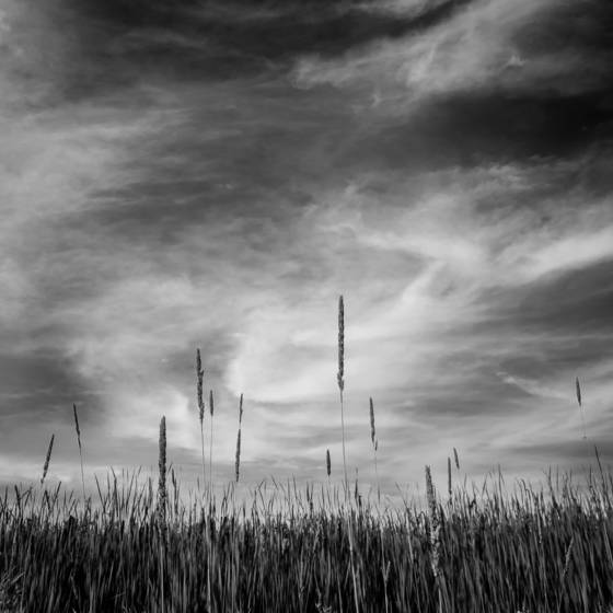 5 prairie grass middleton wi 2010
