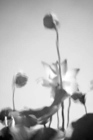 Botanicals 10