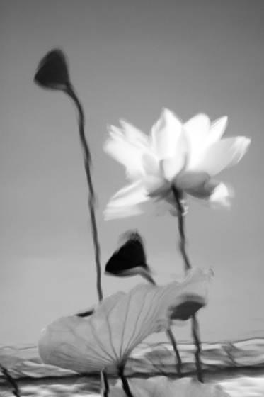 Botanicals 5