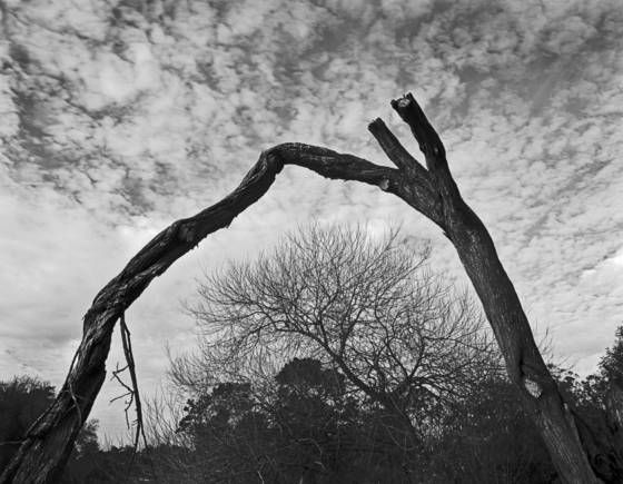 Bending tree and cloud