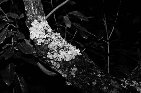 Tree fungi 2