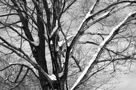 Tree on the corner