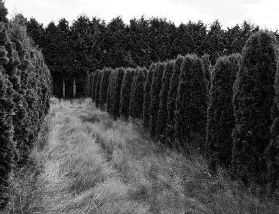 Warrior trees 9