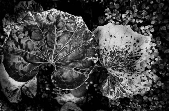 Botanical crash landing