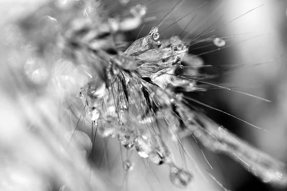 Wild grass and ice  4