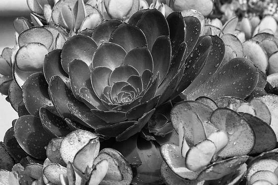 Getty succulent  4