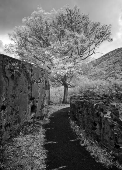 Annaberg tree