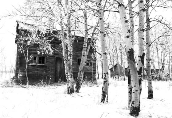 Homestead 1 calgary canada 2012
