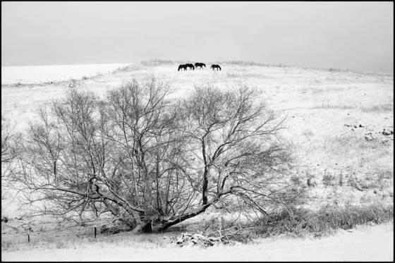 Winter horses