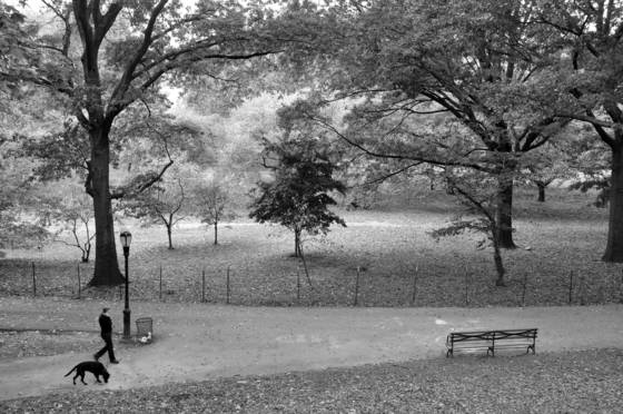 Fall in riverside park