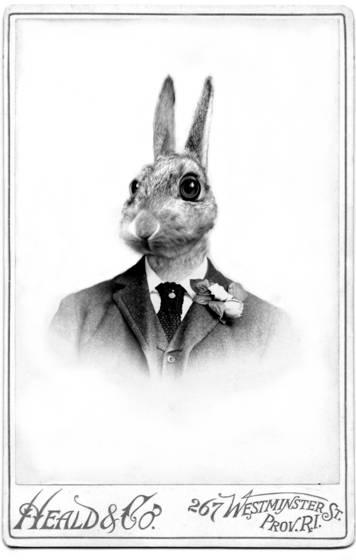 Master rabbit