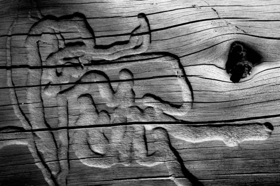 Woodworm patterns