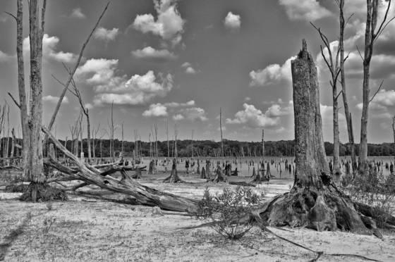 Wetlands  10