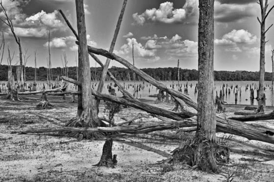 Wetlands  11