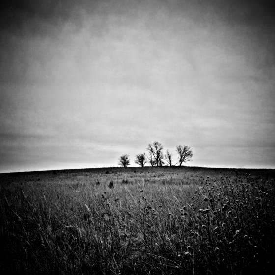 Prairie trees