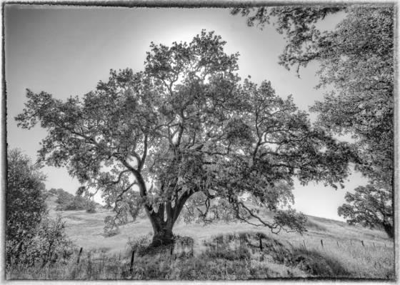 Wild oak  san luis obispo county