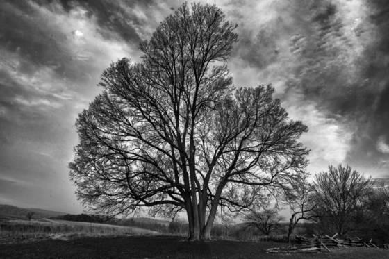 Tree at muhlenberg huts