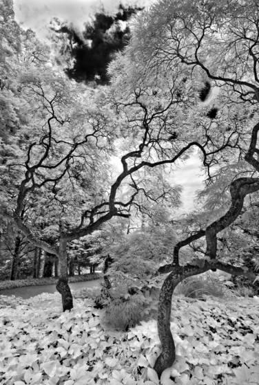 Long is ny trees