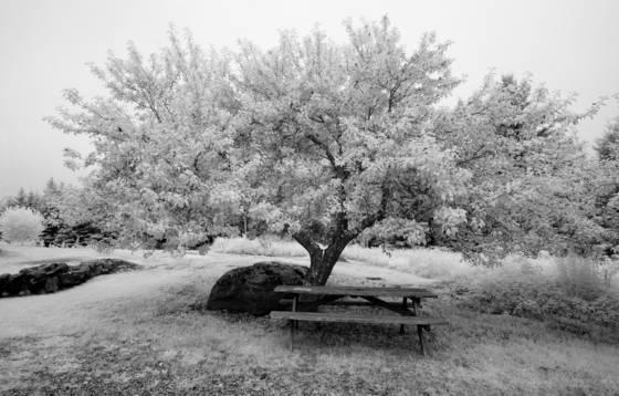 Olson picnic