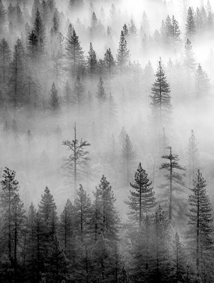 Fog and trees 1