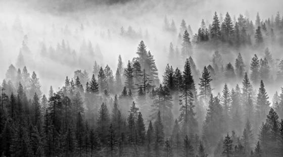 Fog and trees 4